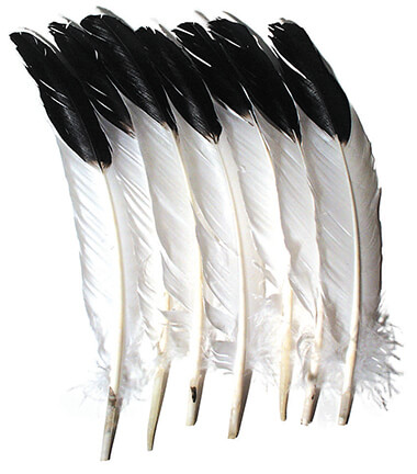 Creativity Street® Imitation Eagle Feathers
